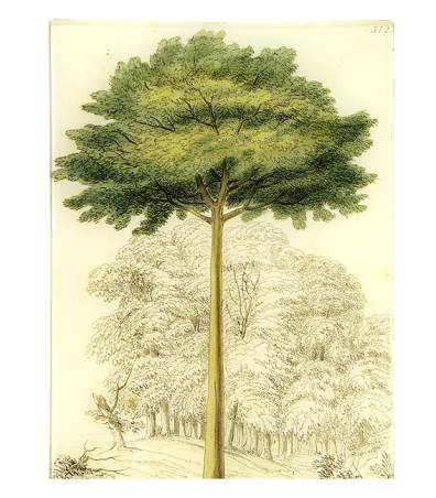 John Derian Tall Tree Tray $106 @ LEKKER HOME