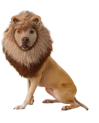 Animal Planet Lion Dog Costume $13 at 168HalloweenCostumes