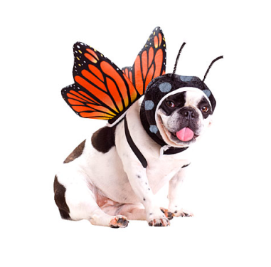 Butterfly Dog Costume $15 at PARTY AMERICA