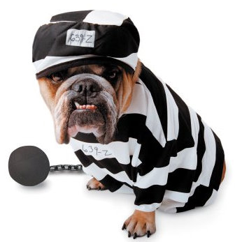 Prisoner Pet Dog Costume $30 at MOON COSTUMES
