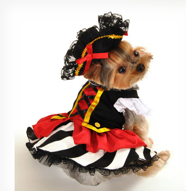Pirate Girl Pet Dog Costume $49 at WAYFAIR