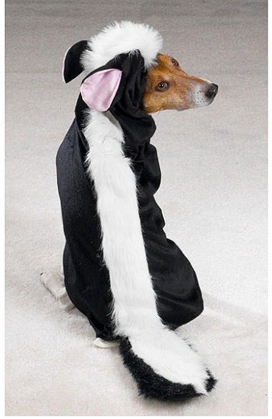 Lil Stinker Skunk Dog Costume $16 at BAXTER BOO