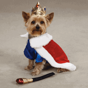 His Majesty The King Dog Costume $12 at GLAMOUR DOG