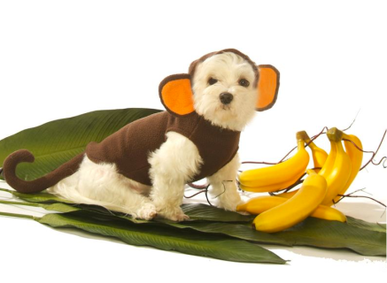 Monkey Dog Costume $28 at SCRAPPY'S CLOSET